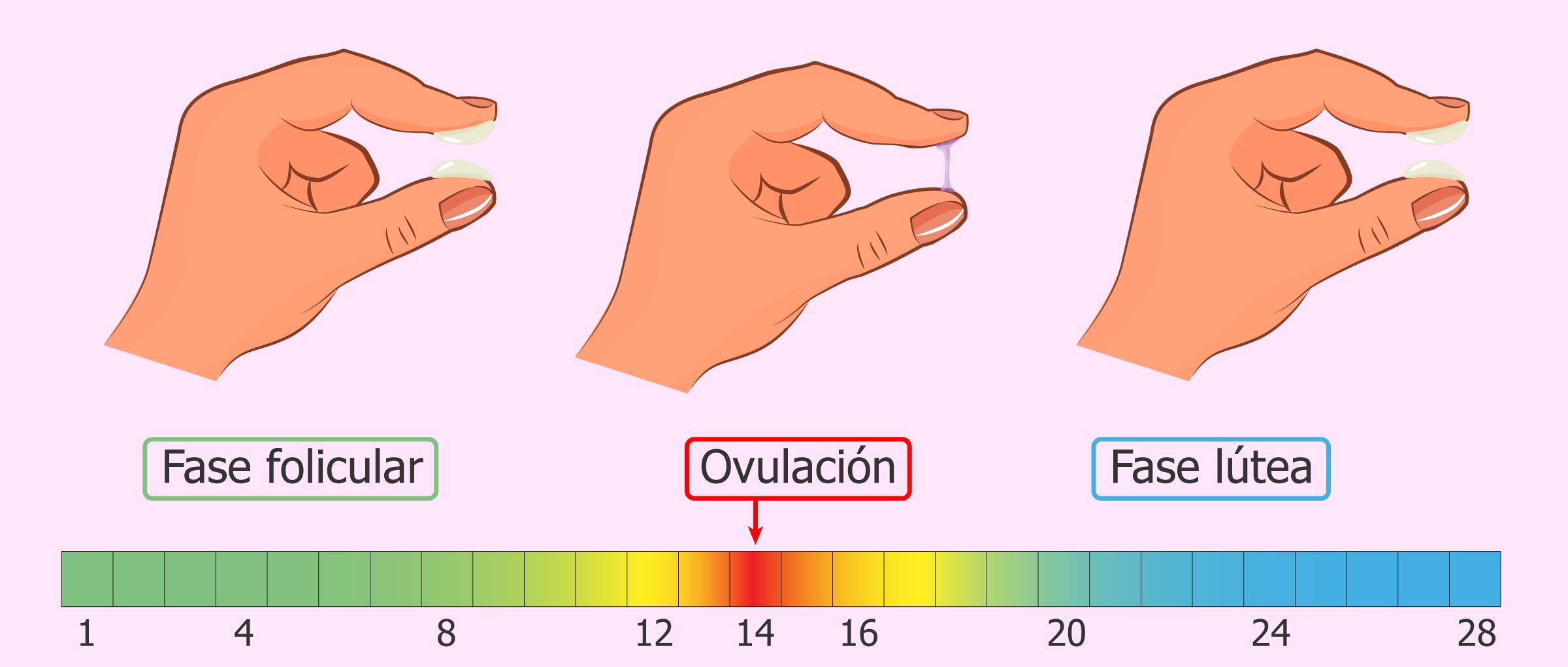 método del moco cervical